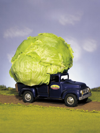 Lettuce in Bed of Miniature Truck Stretched Canvas Print