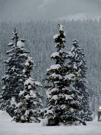 Fresh Snowfall at the Chateau Lake Louise Stretched Canvas Print