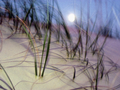 A View of a Full Moon Rising Above a Sand Dune Stretched Canvas Print