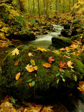 Fallen Leaves on Rocks Next to a Mountain Stream Stretched Canvas Print