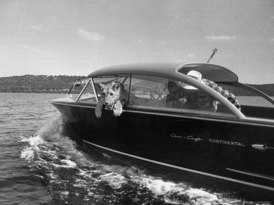 Blondie, the Pet Lion, Fascinated by the Water as She Takes Her First Ride in Chris Craft Motorboat Stretched Canvas Print