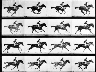 Photographer Eadweard Muybridge's Study of a Horse at Full Gallop in Collotype Print Stretched Canvas Print