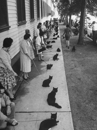 "Owners with Their Black Cats, Waiting in Line For Audition in Movie ""Tales of Terror"" Stretched Canvas Print"