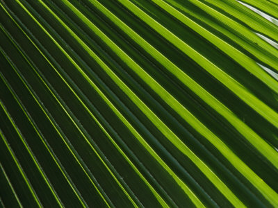 Close View of a Palm Plant Stretched Canvas Print
