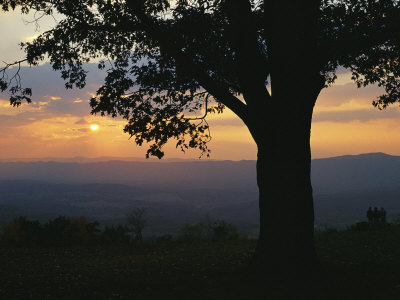 Sunset and Silhouetted Oak Tree over the Shenandoah Valley, Dickeys Ridge Visitors Center Stretched Canvas Print