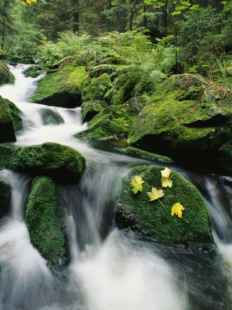 Mountain Stream Cascading Around Moss-Covered Rocks Stretched Canvas Print