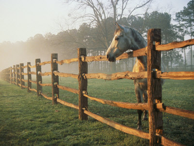 A Horse Watches the Mist Roll in over the Fields Stretched Canvas Print