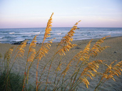 Beach Scene with Sea Oats Stretched Canvas Print
