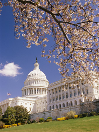 A View of a Cherry Tree in Bloom and the West Face of the Capitol Building Stretched Canvas Print