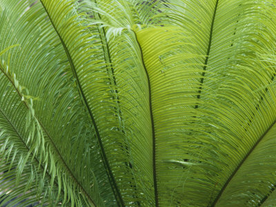A Close View of the Leaves of a Palm Tree Stretched Canvas Print