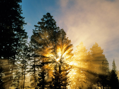 God Rays from Morning Fog Along the Madison River, Yellowstone National Park, Wyoming, USA Stretched Canvas Print