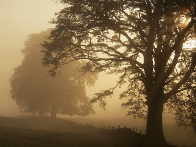 Autumn Morning, Near Dryman, Stirling, Scotland Stretched Canvas Print