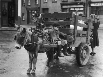 Small Boy Waits Patiently on a Donkey Cart in the Market Place at Kildare Co Kildare Ireland Stretched Canvas Print