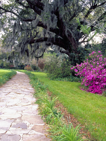 Pathway in Magnolia Plantation and Gardens, Charleston, South Carolina, USA Stretched Canvas Print