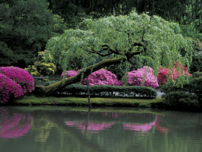 Reflecting pool and Rhododendrons in Japanese Garden, Seattle, Washington, USA Stretched Canvas Print