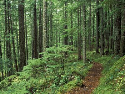 Silver Falls Trail, Mt. Rainier National Park, Washington, USA Stretched Canvas Print