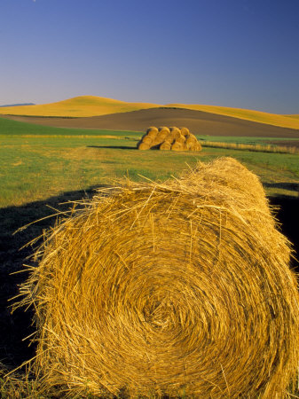 Hay Bales in Field, Palouse, Washington, USA Stretched Canvas Print