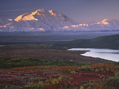 Denali National Park near Wonder Lake, Alaska, USA Stretched Canvas Print