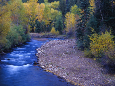 San Miguel River and Aspens in Autumn, Colorado, USA Stretched Canvas Print