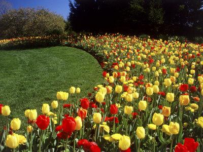 Chicago Botanic Garden, Illinois, USA Stretched Canvas Print