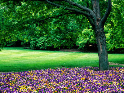Garden at Cantigny Estate, Winfield, United States of America Stretched Canvas Print