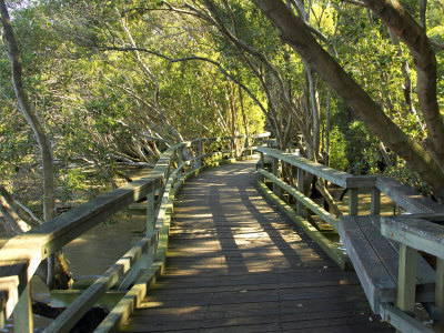 Mangrove Boardwalk, Botanic Gardens, Brisbane, Queensland, Australia Stretched Canvas Print