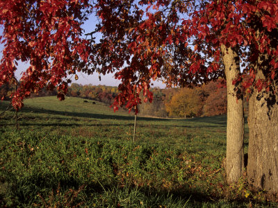 Autumn Color Frames the Rolling Hills of the Virginia Foxhunt Country Stretched Canvas Print
