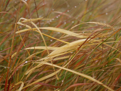 A Close View of Raindrops on the Meadow Grass Stretched Canvas Print