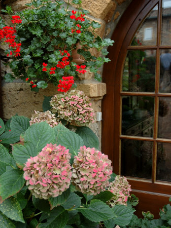 Geraniums and Hydrangea by Doorway, Chateau de Cercy, Burgundy, France Stretched Canvas Print