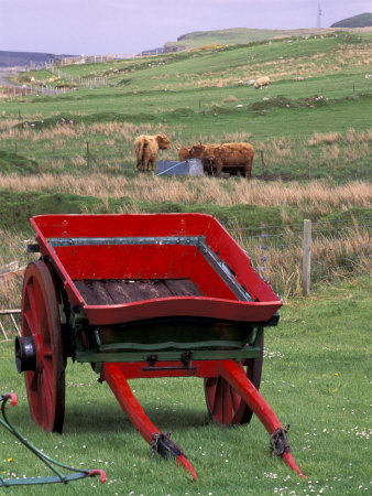 Farm Animals and Wheelbarrow, Kilmuir, Isle of Skye, Scotland Stretched Canvas Print