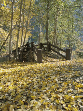 A Sentinel Meadow Footbridge Blanketed in Autumn Foliage Stretched Canvas Print