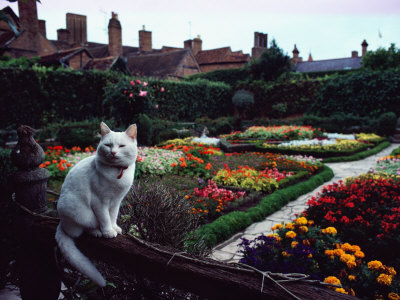 White Cat Perched on a Fence Overlooking the Gardens at Stratford-Upon-Avon, England Stretched Canvas Print
