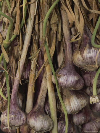 Shallots at a Market in Provence Stretched Canvas Print