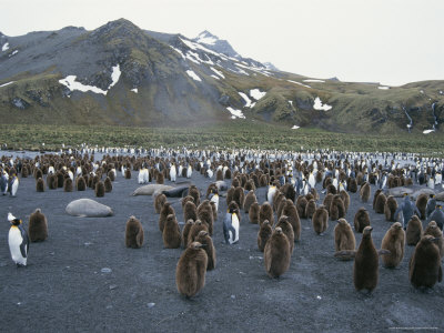 adult and juvenile king penguins share their rookery with sleepy seals Alex Pettyfer IS Bringing Sexy Back. Alex Pettyfer IS Bringing Sexy Back