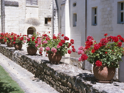 Row of Blooming Geraniums in Clay Pots Stretched Canvas Print