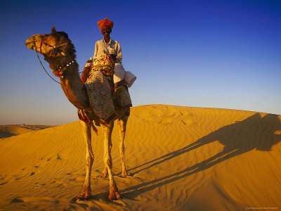 Man Atop Camel, Thar Desert, Rajasthan, India Stretched Canvas Print