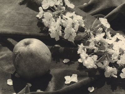 The Flower and the Fruit Stretched Canvas Print