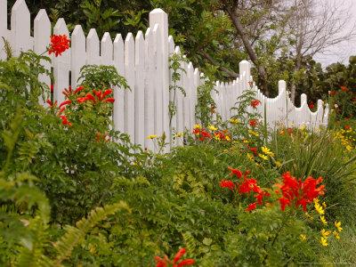 Border Garden, New Smyrna Beach, Florida Stretched Canvas Print