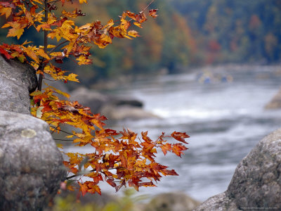 Autumn Hues and Large Boulders Along the Gauley River Stretched Canvas Print