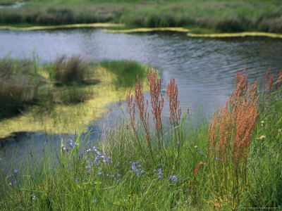 Ferns, Sedges, and Wildflowers Growing Along the Banks of a Waterway Stretched Canvas Print