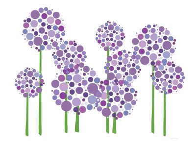Purple Allium Stretched Canvas Print