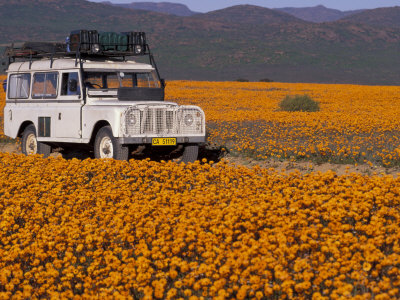 4X4 in Meadow of Daisies, South Africa Stretched Canvas Print