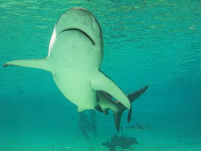gold coast queensland australia. Shark, Sea World, Gold Coast,