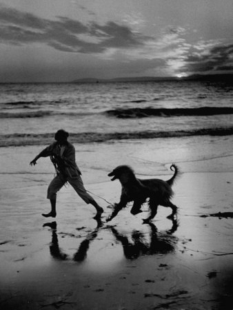Afghan Dog Roaming across Beach with Girl at Sundown, During Preparation for Westminister Show Stretched Canvas Print