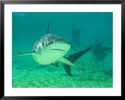 gold coast queensland. Shark, Sea World, Gold Coast,