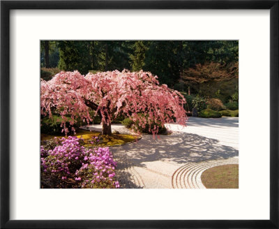 cherry tree drawing in blossom. cherry tree drawing in lossom. cherry tree blossom drawing.