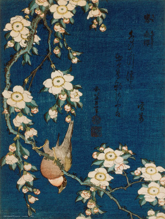 japanese cherry tree branch. Goldfinch and Cherry Tree,