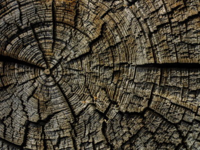 Close Up of Tree Bark Stretched Canvas Print