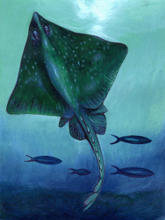 Stingray and Fish Underwater Stretched Canvas Print
