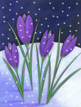 Crocus Flowers Blooming in Snowfall Stretched Canvas Print
